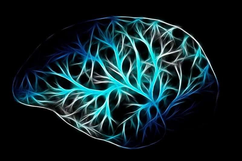 neuronas | neuronas
